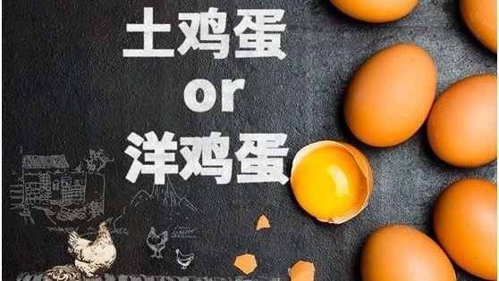 一天吃多少个鸡蛋?安不安全? 旭派电池